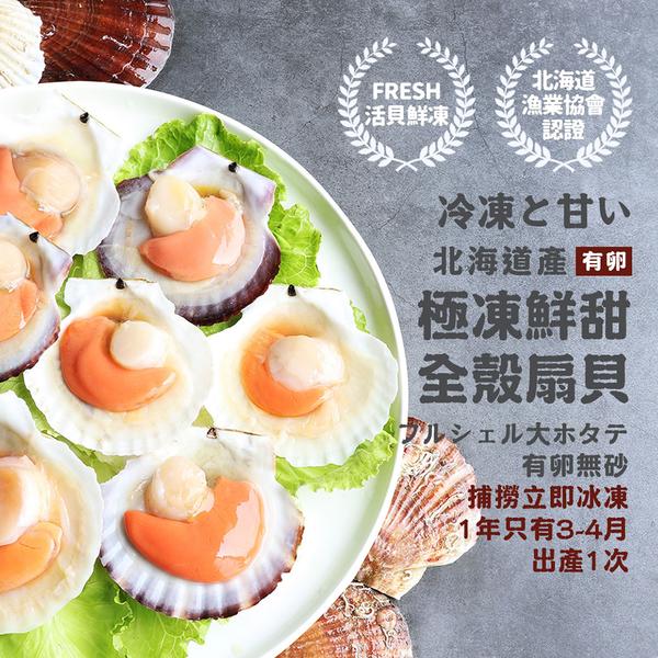 【屏聚美食】北海道活凍全殼扇貝(500G/約4-7顆/包)_第2件以上每件↘169元