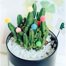 裝飾彩色小毛球微景觀(10入) 多肉植物裝飾【A021003】