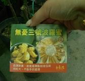 花花世界_水果苗--無憂3號波羅蜜--新品種/4吋盆/高40公分/Ts
