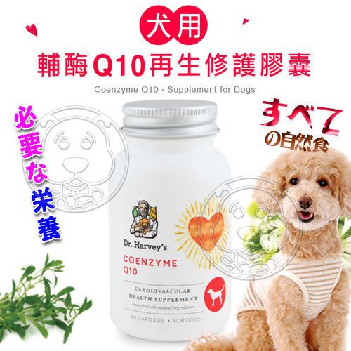 【培菓平價寵物網】美國哈維博士Dr.Harveys》犬用輔脢Q10再生修護膠囊-60粒裝