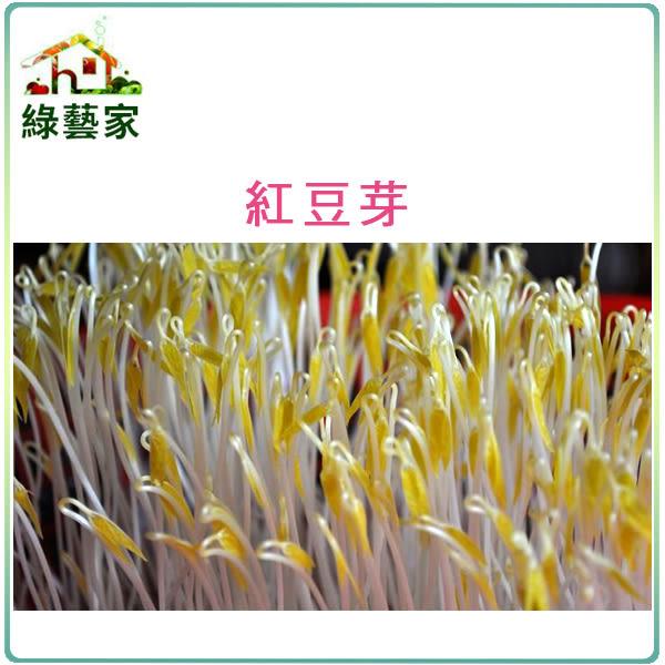 【綠藝家】大包裝J13紅豆芽種子500克
