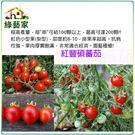【綠藝家】G23.紅豐碩蕃茄種子3顆...
