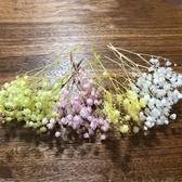 日本大地農園,大顆滿天星,霞草,一份1克