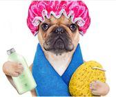 狗狗沐浴露金毛比熊泰迪專用洗澡液貓咪薩摩殺菌除臭止癢寵物用品