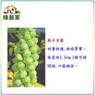 【綠藝家】大包裝B10.抱子甘藍種子8克...