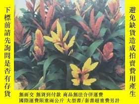 二手書博民逛書店《花卉罕見1998 1》龍膽果須及時摘果、花葉俱佳的水塔花、如何