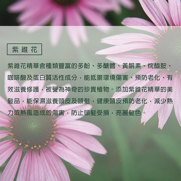 【潔麗雅】自然微風 紫錐花保濕洗髮露(CR)260ml