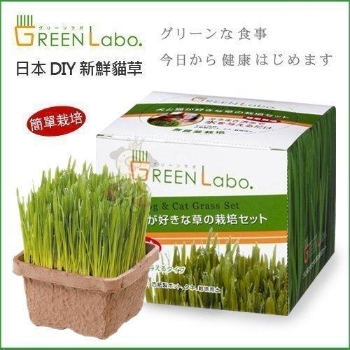 *WANG*日本GreenLabo燕麥盆栽組DIY新鮮貓草盆栽燕麥種子貓草組合包懶人包易種包