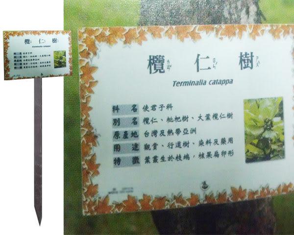 彩色照片 植物解說牌 17.8X25cm 附專用插桿支柱 60cm 購買時請告知植物名稱