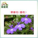 【綠藝家】大包裝H29.翠蝶花(蔓性)種...