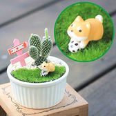 【迎光】汪星人多肉陶瓷植栽-柴犬