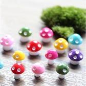 CARMO大號-彩色小蘑菇多肉植物微景觀(單入) 盆栽裝飾【A030017】