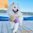 中大型犬狗狗衣服夏日網眼透氣涼涼T恤撞色的星星【小獅子】