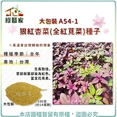 【綠藝家】大包裝A54-1.狠紅杏菜(全紅莧菜)種子100克(約14萬顆)