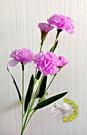 [紫色] 一支5朵花 人造康乃馨.假康乃馨.仿真康乃馨 母親節禮物花束☆人造花.居家.店面.櫥窗擺飾