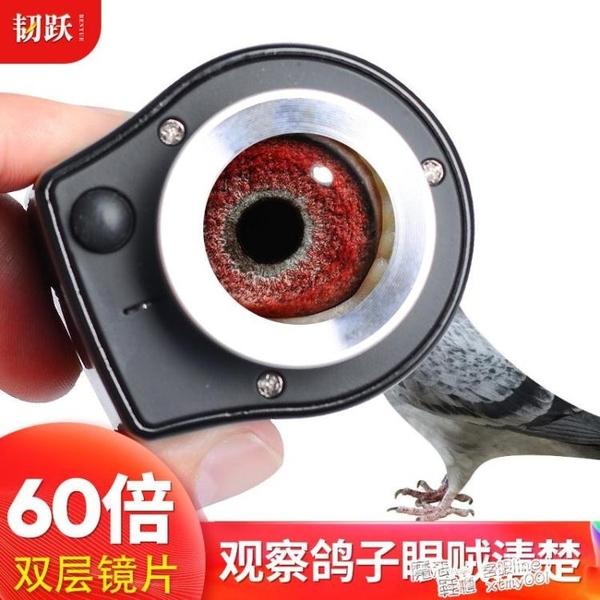 韌躍60倍專業看鴿子眼帶刻度放大鏡高清高倍郵票古玩錢幣 夏季新品