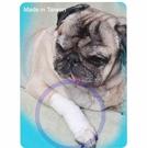寵物受傷用繃帶 - 關節用繃帶 尺寸M、L  大、中、小型寵物 受傷 簡單急救包紮 台灣製造