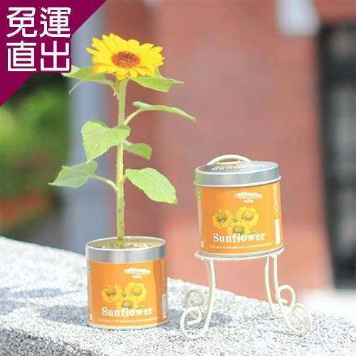 迎光 Cultivation Table栽培罐迷你向日葵【免運直出】