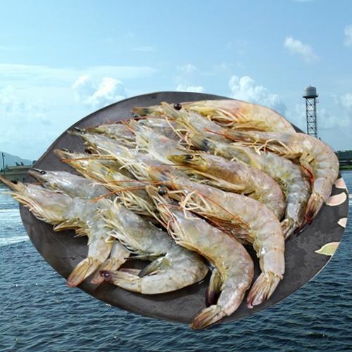 【大口市集】回購率95%熱炒必吃-無毒蝦白蝦海老蝦 900g/盒