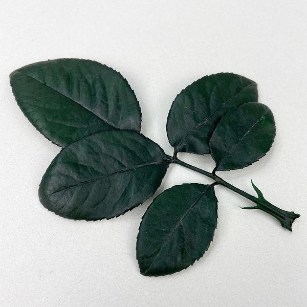 進口永生玫瑰葉-乾燥花圈 乾燥花束 不凋花配草 拍照道具 室內擺飾 乾燥花材-3葉/枝