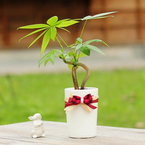 【迎光】經典白瓷發財樹