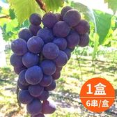 【樂品食尚】卓蘭特產-產地直送巨峰葡萄5斤x1盒(6串/盒)