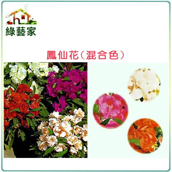【綠藝家】H31.鳳仙花(混合色,高35cm)種子10顆
