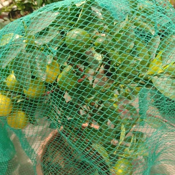 防鳥網罩櫻桃網果樹防鳥網