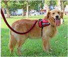 狗繩狗錬子中型大型犬胸背帶式金毛拉布拉多寵物背心送牽引繩「摩登大道」