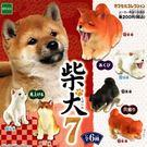 全套6款【日本正版】可愛柴犬 造型公仔 ...