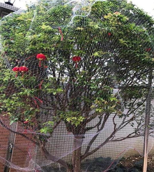防鳥網葡萄=果樹櫻桃魚線網