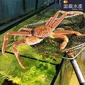 ㊣盅龐水產◇活體松葉蟹◇清蒸就是好吃 蟹肉嫩(不定重)(需實際秤重報價)
