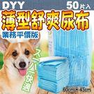【培菓平價寵物網】dyy平價薄型舒爽業務尿布50入(60*45cm)