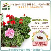 【綠藝家】大包裝H55.天竺葵種子0.25克(約50顆)(畫盒混合色.株高約40公分)
