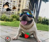 寵物眼鏡狗狗墨鏡狗眼鏡法斗柯基巴哥泰迪太陽鏡犬用防護眼鏡 聖誕狂購免運大購物