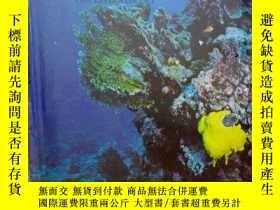 二手書博民逛書店RED罕見SEA CORAL REEFS(沙特阿拉伯海洋生物:紅