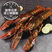 【獨家進口】當季活凍波士頓大龍蝦 1隻組(500g±10%/隻)(食肉鮮生)