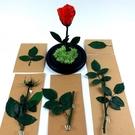 永生花花材,玫瑰花支一組5款 (包含10、15、20cm帶葉花支)