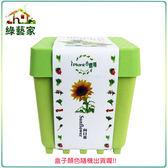 【綠藝家】iPlant小農場系列-向日葵
