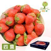 樂園樹.無農藥草莓鮮果600g/盒(共4盒)﹍愛食網