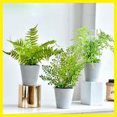 新年大促ins現代家居室內辦公室植物盆景仿真綠植盆栽北歐簡約裝飾擺件 森活雜貨