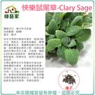 【綠藝家】K28.快樂鼠尾草種子80顆