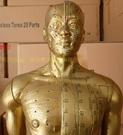 170CM人體針灸模型針灸銅人模型178...