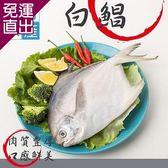 漢哥水產 特選鮮嫩白鯧魚2尾組300g/尾【免運直出】