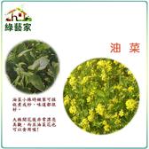 【綠藝家】大包裝A16.油菜種子380克(約14000顆)