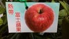 花花世界_水果苗-- 熱帶富士蘋果--平...