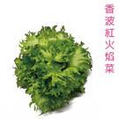 水耕蔬菜-香波紅火焰菜150g 【 產地直送,須等7-9天】