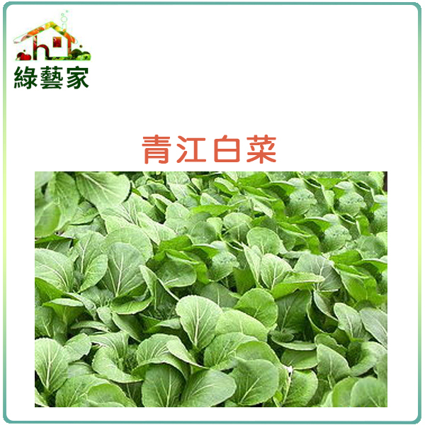 【綠藝家】A03.青江白菜種子10000顆