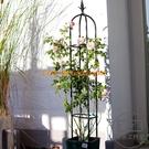 花架支架爬藤架藤本月季攀藤架圓柱花盆架植物支架【輕派工作室】
