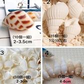 永生花海洋風,貝殼裝飾,一組價